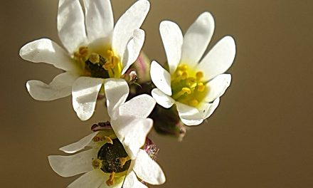 Small is beautiful – a Wildflower in January!