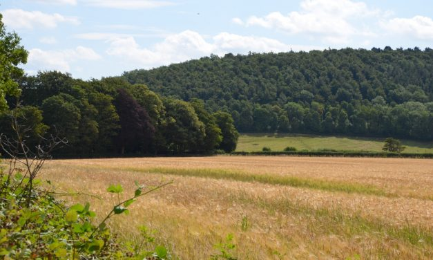 Have your say on the future of Guisborough Forest